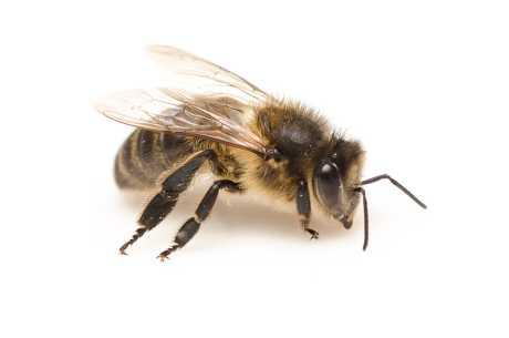 Stikk av bie
