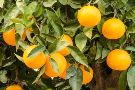 Frukt mot tretthet